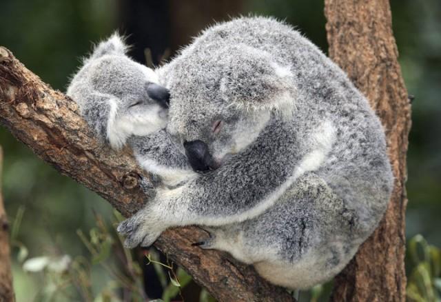 Top 10 Highlights of Australia