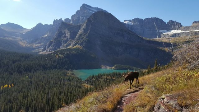 Kelly goes to Glacier National Park (Montana)