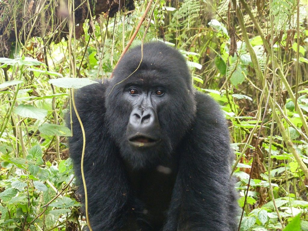 5 Exciting Things to Do in Rwanda During Your Vacation